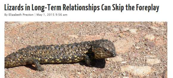 Lizards in long-term relationships can skip the foreplay